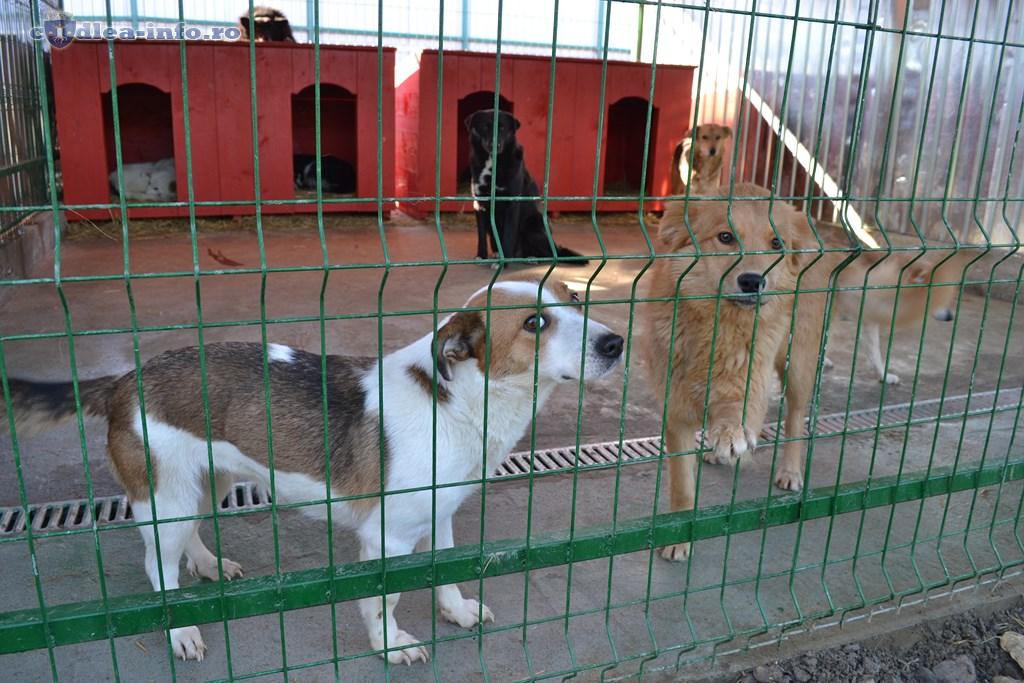 Adăposturile de câini, verificate de inspectorii sanitar-veterinari